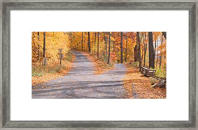 Forked Road In A Forest, Vermont, Usa Framed Print by Panoramic Images