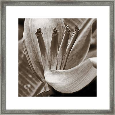 Form Color Texture Pattern Plants 2 Framed Print by Charlie Osborn
