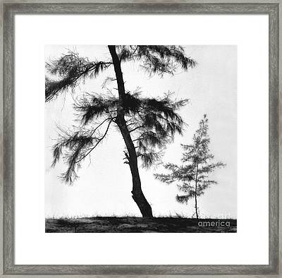 Form Of Tree  Framed Print by Indian School