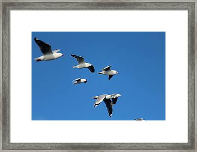 Formation Framed Print