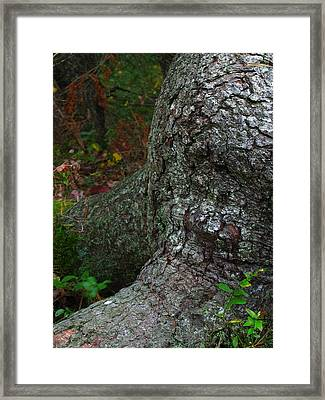 Forms In Nature Framed Print by Juergen Roth