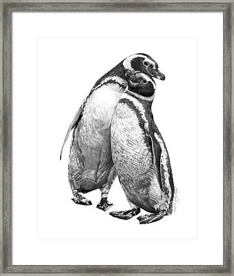 Forrest And Jenny The Penguins Framed Print