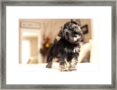 Forrest Arthur Framed Print