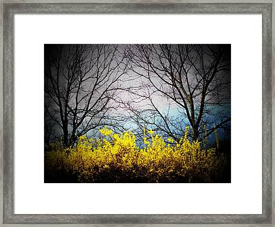 Forsythia By The Mountains Framed Print by Joyce Kimble Smith