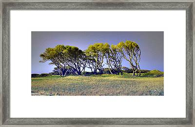 Framed Print featuring the photograph Fort Fisher Trees by Phil Mancuso