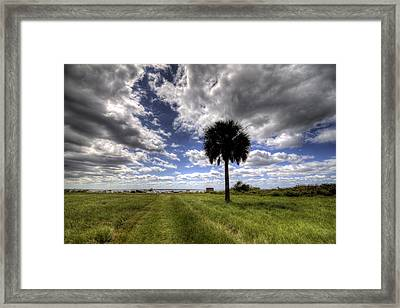 Fort Moultrie Palm  Framed Print by Dustin K Ryan
