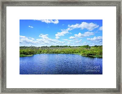 Fort Pierce Florida Savannah II Framed Print by Liesl Marelli