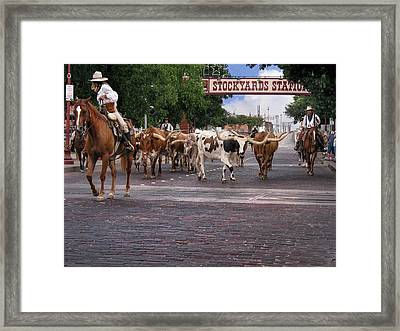 Fort Worth Cattle Drive Framed Print