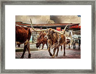 Fort Worth Stockyards Framed Print by Kelley King