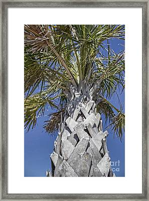 Fortified Foundation Palm Framed Print