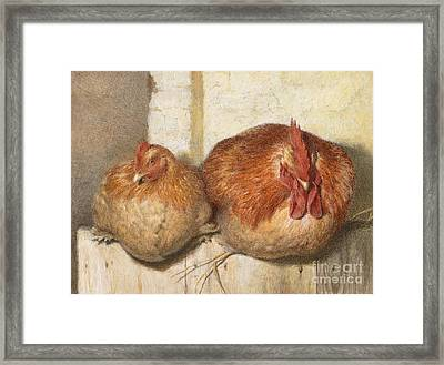 Forty Winks Framed Print by JG Marks