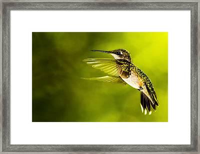 Forward Stroke - Hummingbird Framed Print