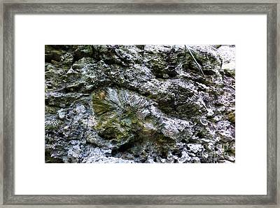Framed Print featuring the photograph Fossil In The Wall by Francesca Mackenney