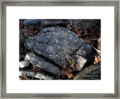 Fossil Rock At Richland Creek Framed Print by Steve Grisham