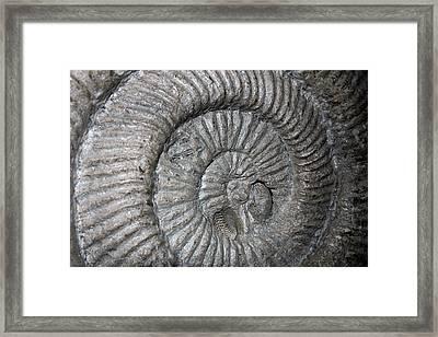 Fossil Spiral  Framed Print