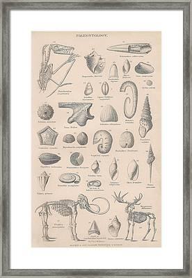 Fossils, Paleontology Framed Print