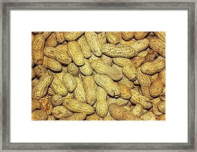 Found A Peanut Framed Print