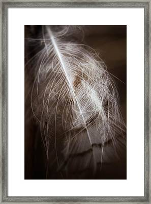 Found Feather Framed Print
