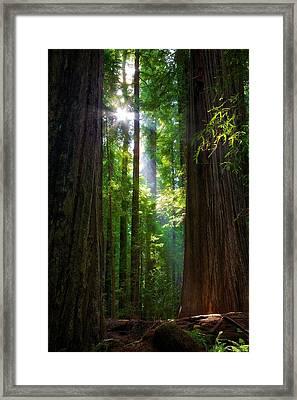 Founders Tree Sunset Framed Print
