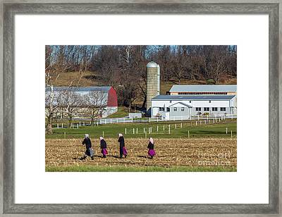 Four Amish Women In Field Framed Print