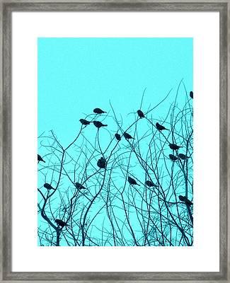 Four And Twenty Blackbirds Framed Print