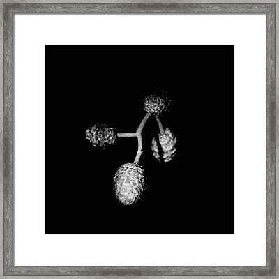 Four Buds Framed Print by Tommytechno Sweden