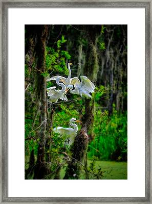 Framed Print featuring the photograph Four Egrets In Tree by Harry Spitz