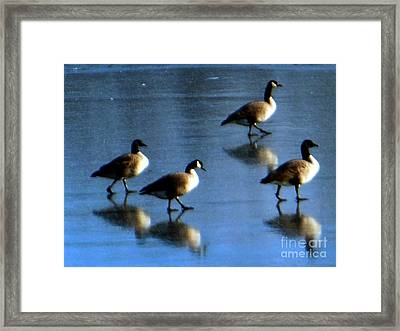 Four Geese Walking On Ice Framed Print