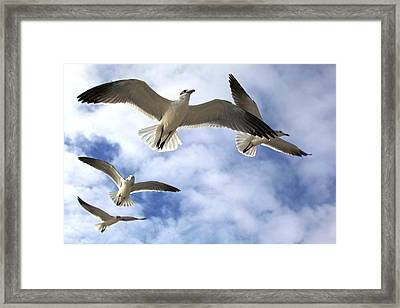 Four Gulls Framed Print