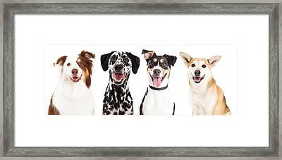 Four Happy Dog Closeups Framed Print