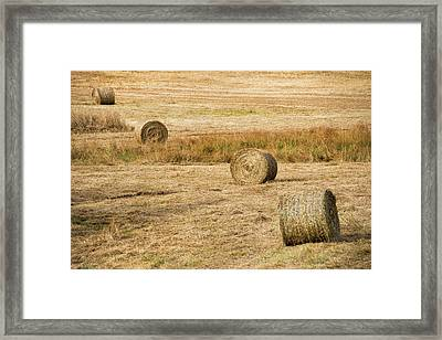 Four Hay Balls -  Framed Print