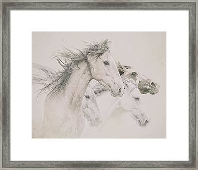Four Horses Framed Print by Ron  McGinnis