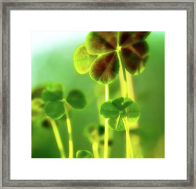 Four Leaf Clover Framed Print