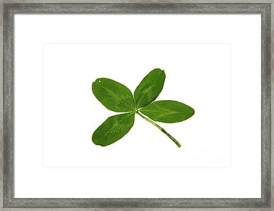 Four Leaf Clover Framed Print by Photo Researchers