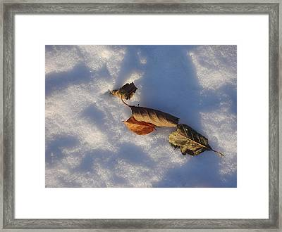 Four Leaves Framed Print
