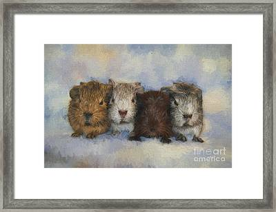 Four Little Guinea Pigs Framed Print by Jutta Maria Pusl