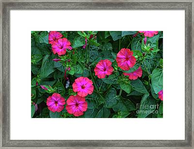 Framed Print featuring the photograph Four O'clock by Ann Jacobson