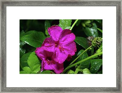 Framed Print featuring the photograph Four O'clock At 9am  by Richard Rizzo