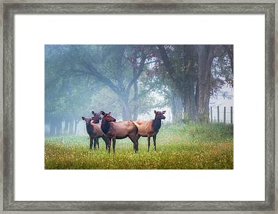 Framed Print featuring the photograph Four Of A Kind by James Barber
