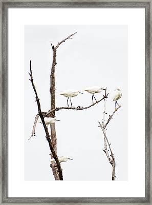 Four Of Five Framed Print