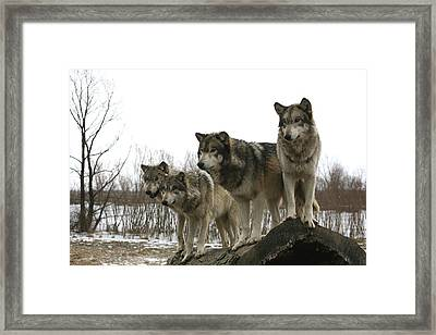 Framed Print featuring the photograph Four Pack by Shari Jardina