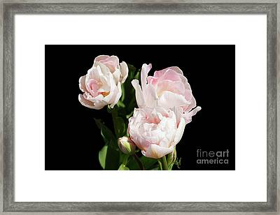 Four Pink Tulips And A Bud On Black Framed Print