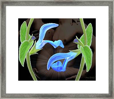 Four Play Framed Print by Torie Tiffany