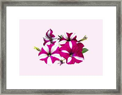 Four Red And White Petunias Framed Print by Susan Savad