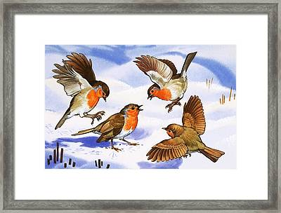 Four Robins In The Snow Framed Print by English School