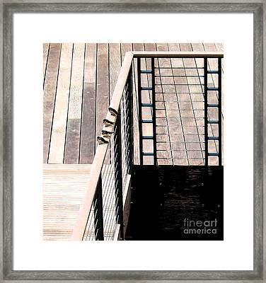 Four Swallows Framed Print by Gary Everson