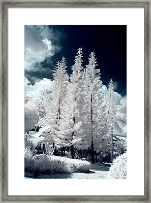 Four Tropical Pines Infrared Framed Print by Adam Romanowicz
