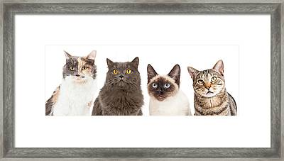 Four Various Breed Cat Closeups Framed Print