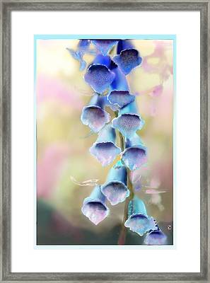 Fox Breeze Framed Print