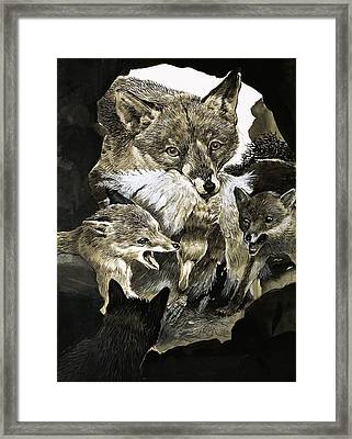 Fox Delivering Food To Its Cubs  Framed Print